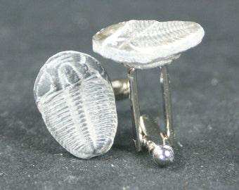 Trilobite Fossil Cufflinks No. 15  Free Cufflink Box By Cufflinked