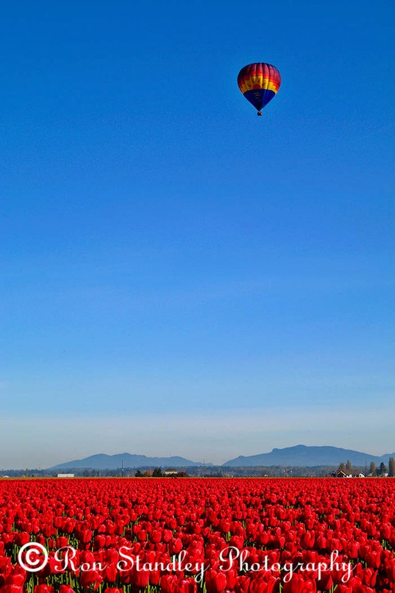 Tulip field hot air balloon instant download printable art