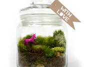 Moss Terrarium // Unicorn // Hot Pink