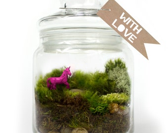 Moss Terrarium // Unicorn // Hot Pink