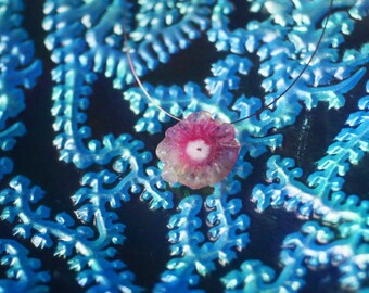 Floating Pendant Necklace with Watermelon dyed Solar Quartz