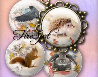 Forest Animal squirrel bird fawn - Digital Collage Sheet 1.5 inch,1.25 inch,30 mm,1 inch,25 mm circle Glass Pendants,Scrapbooking