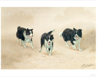 Border Collie Dog Portrait by award winning artist JOHN SILVER. Personally signed A4 or A3 size Print. BC013SP