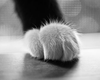Tuxedo Cat Paw, Cat photography, Cat decor, cat print, cat art, Tuxedo cat, black and white cat, kitty, cat knuckles, valentines day