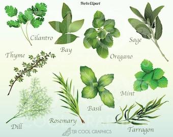 Herbs Realistic Digital Clipart, PNG, Printable, Rosemary, Thyme, Basil, Dill, Mint, Cilantro, Bay, Sage, Oregano, Tarragon