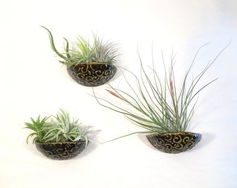 air plant wall pocket / sconce planter / air plant hanger / hanging planter / chocolate brown