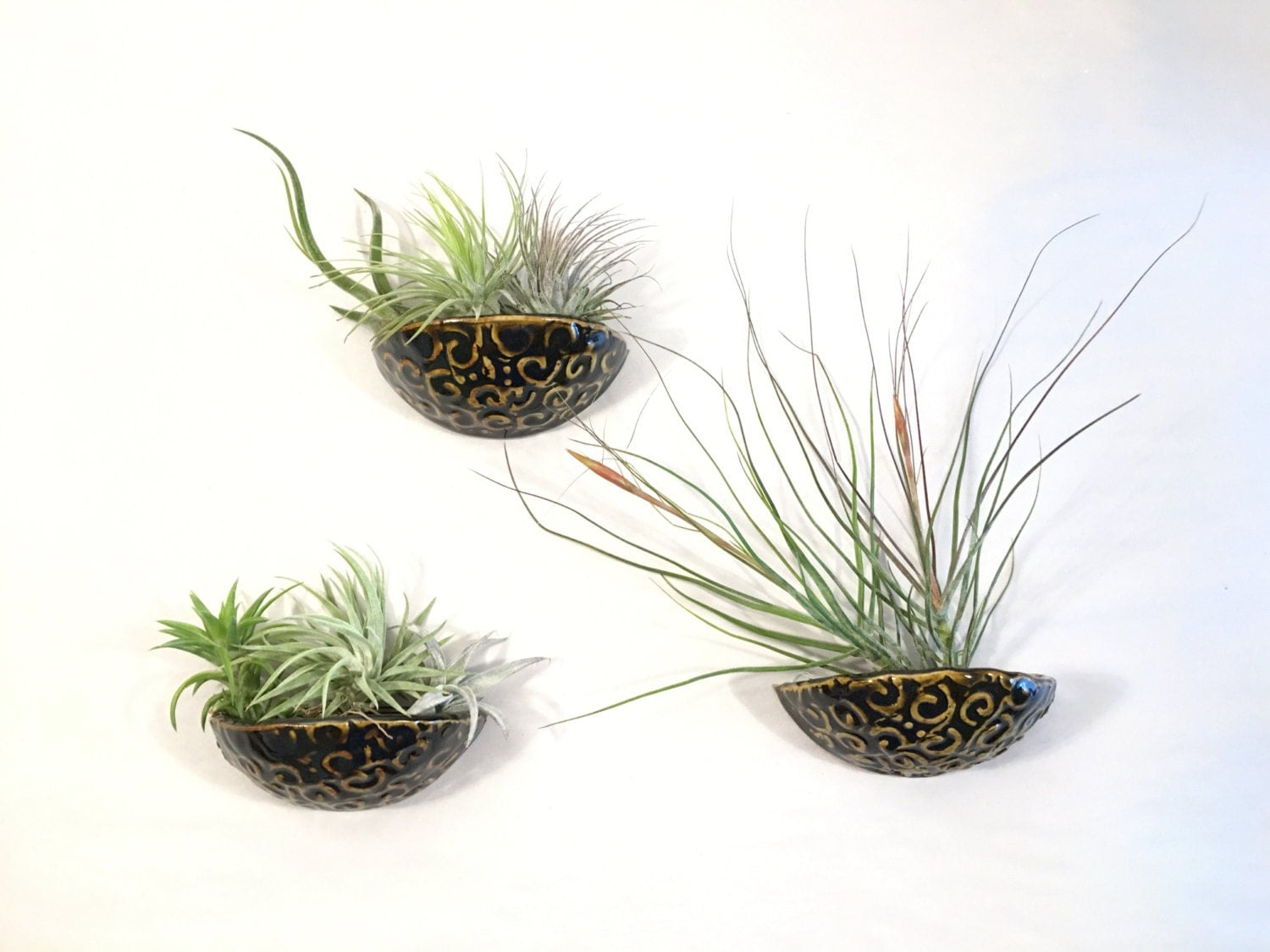 Air plant wall pocket sconce planter air plant hanger for Air plant wall hanger