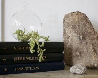 Knitted Terrarium - Witch's Hair Lichen