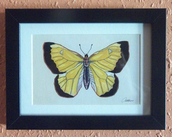 Yellow Butterfly Picture Butterfly Print Framed -Clouded Yellow Butterfly - a burst of sunshine, framed to set of it's colouring