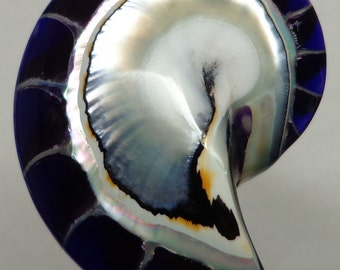 Purple Tiger Nautilus Shell half 50mm x 33mm x 12mm