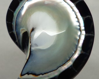 Black Tiger Nautilus Shell half 30mm x 23mm x 7mm