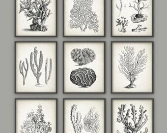 Vintage Coral Wall Art Set Of 9 - Marine Wall Art Posters - Coral Illustrations - Nautical Print - Marine Biology Wall Art AB411
