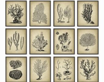Vintage Coral Wall Art Set Of 12 - Marine Wall Art Posters - Coral Illustrations - Nautical Print - Marine Biology Wall Art AB410
