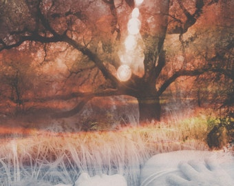 Hope Surreal Art, Infrared Photo, Spiritual Art, Hope Verse, Psalms 46:5 Art, Photo Collage, Surreal Photo, Photo Montage, Infrared Woodland