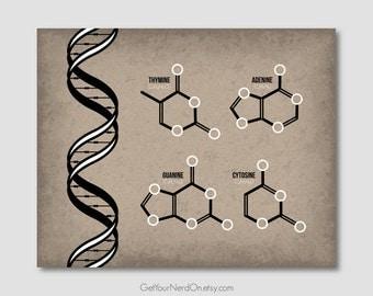 DNA Molecule Poster, Science Teacher Gift, Genetics Wall Art, Double Helix Print, Best Seller