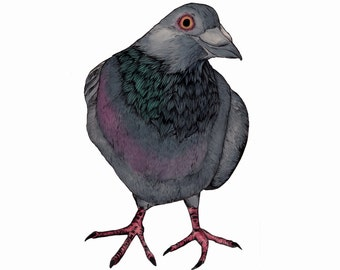 Limited Edition A4 Pigeon Print