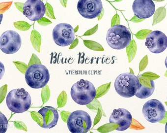Watercolor Clipart Blue Berries, blueberries, botantical blueberry, background, pattern for instant download, scrapbook