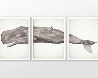 Sperm Whale Print Set Of 3 - Sperm Whale Watercolor Painting Print - Sperm Whale Bathroom Art - Set Of Three Prints #2094 - INSTANT DOWNLOAD