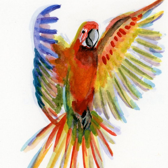 "Scarlet Macaw - Watercolor - 4"" x 4 1/2"""