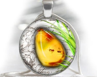 """Amber and Amber with insect - bottle cap images - 1'' circles, 25mm, 30mm, 1.25"""", 1.5"""" for Jewelry Making, BUY 2 GET 1 FREE"""