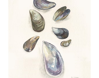 Mussels drawing, PRINT of watercolor and pencil of Sea Mussels. Seafood illustration by Catalina.