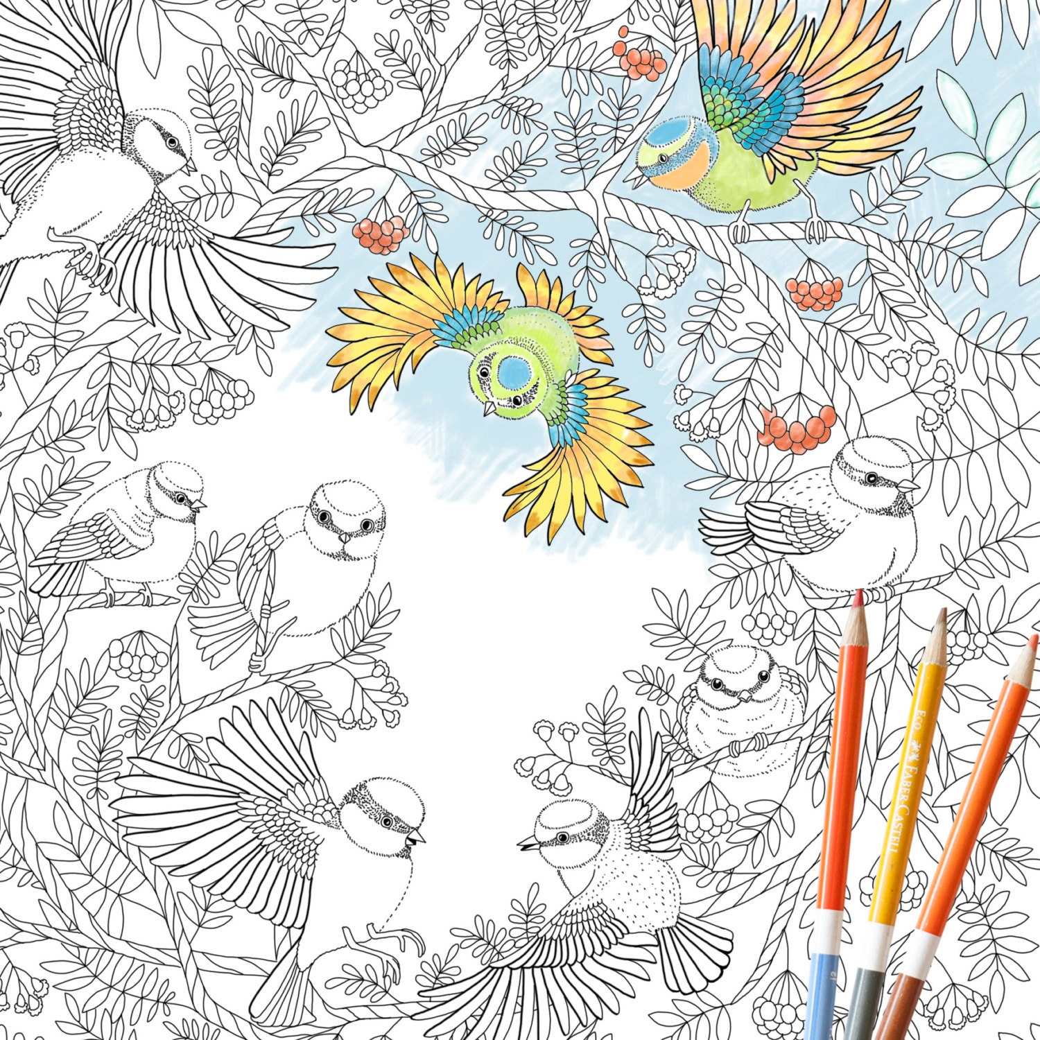 Coloring Page INSTANT DOWNLOAD Paradise Birds Adult