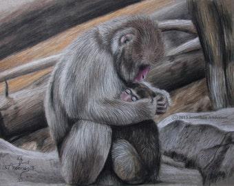 Monkey scene in colored pencil