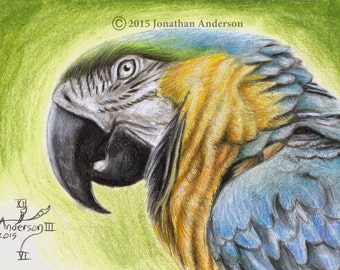 Parrot close up original 5x7 inch colored pencil drawing