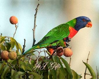 Colorful Bird Digital Downloadable V1