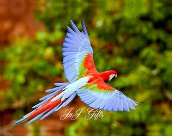 Beautiful  Rainbow Lorikeet Digital Downloadable V4