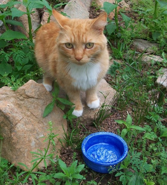 """Ceramic Cat Bowl -- Hemingway Quote Bowl in French Blue glaze, """"One Cat Just Leads to Another..."""""""