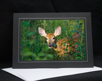 White Tail Fawn, deer, photo greeting card, wildlife photography, Nature, upstate NY, any occasion,