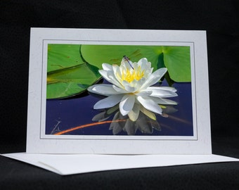 Dragonfly on a Water Lily, photo greeting card, wildlife photography, Nature, upstate NY, any occasion,