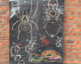 FLASH SALE- 1950s Spider Anatomy French Poster