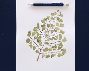 Maidenhair Fern - Print from Original Watercolour
