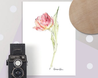 Tulip Botanical Art, Floral Drawing in Red | Limited Edition of 20 Giclee Art Prints