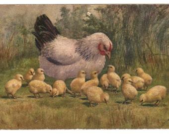 Belgian vintage postcard, 1950, Easter