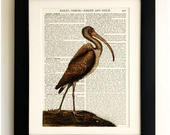 ART PRINT on old antique book page - Big Bird, Stork, Butterflies, Vintage Upcycled Wall Art Print Encyclopaedia Dictionary Page, Fab Gift!