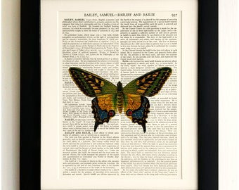 FRAMED ART PRINT on old antique book page - Beautiful Big Butterfly, Insects, Vintage Upcycled Wall Art Print Encyclopaedia Dictionary Page