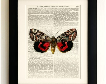 FRAMED ART PRINT on old antique book page - Big Red Butterfly, Insects, Vintage Upcycled Wall Art Print Encyclopaedia Dictionary Page