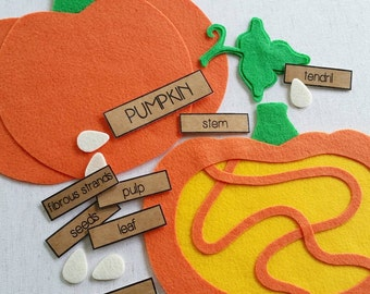Parts of a PUMPKIN - Felt Board Learning Set, Felt Board Stories, Felt Board Pieces, Circle Time, Educational Toys