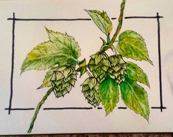 Original ink and watercolor drawing of hops