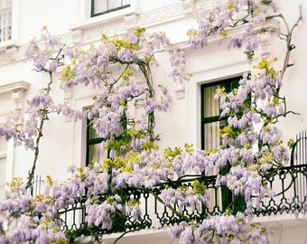 London Photography, architecture, windows, flowers, wisteria, Europe, purple, lilac, cream, spring, floral, botanical, Wall Art, Home Decor