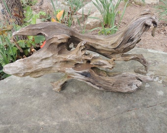 Driftwood Sculpture Created by Water, Wind, and a Beaver!