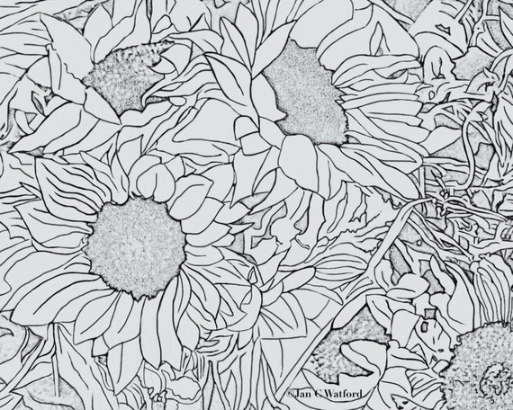 Sunflowers 1 Adult Coloring Pages Page Printable Gray Scale Digital Download Book Stress Relief