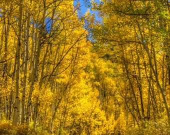 Photo Art - Mountain Photography - Fall Colors