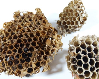 Paper Wasp Nests - Collection of 3