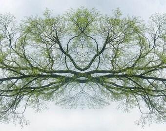 Yogi Tree