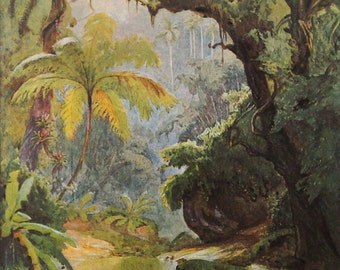 Brazil tropical rain forest original 1911 painting print - Art, wall decor - 104 years old French antique collectible illustration (B280)