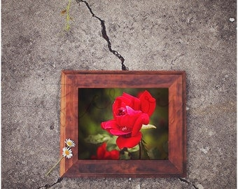 Rose Photography. Red Rose Print. Flower Print. Flower Photography. Floral Wall Art. Flower Art Print. Fine Art Photography.